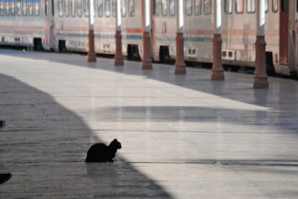 Train station cat.