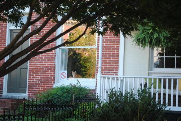 Neighborhood watch cat.