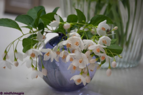 At least I brought a few fragrant snowbell blossoms into the house.